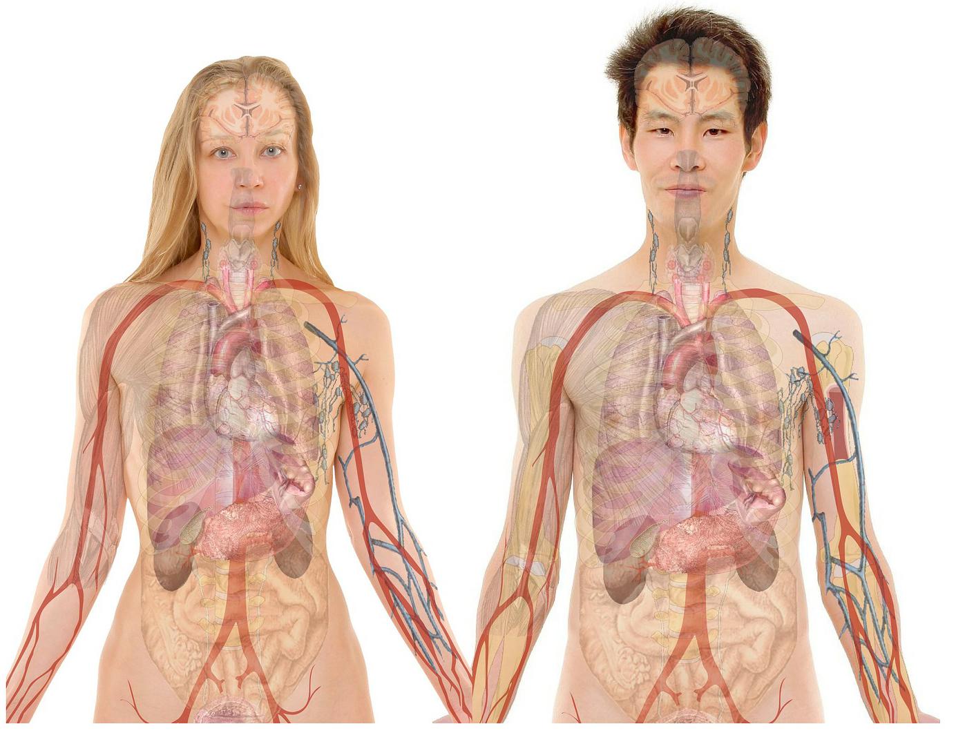 Santé physique - cliquer sur l'image